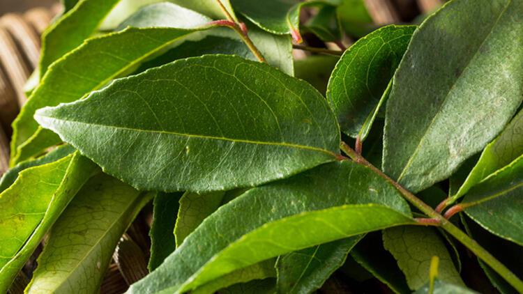 2.Köri yaprakları